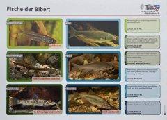 Grossansicht in neuem Fenster: Fischlehrpfad
