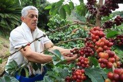 Grossansicht in neuem Fenster: roestkaffee - Pflücker