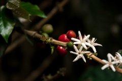 Grossansicht in neuem Fenster: roestkaffee - Kaffeebohnen